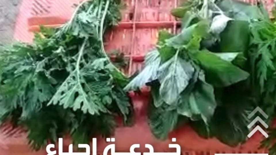 احذروا.. طريقة خطيرة لتنشيط الخضروات الذابلة