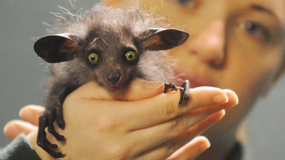 Top 10 strangest animals in the world