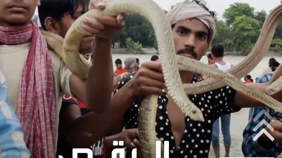 يلهون بها وكأنها دمية.. طقوس غريبة في الهند، الكبار والصغار يرقصون بالأفاعي