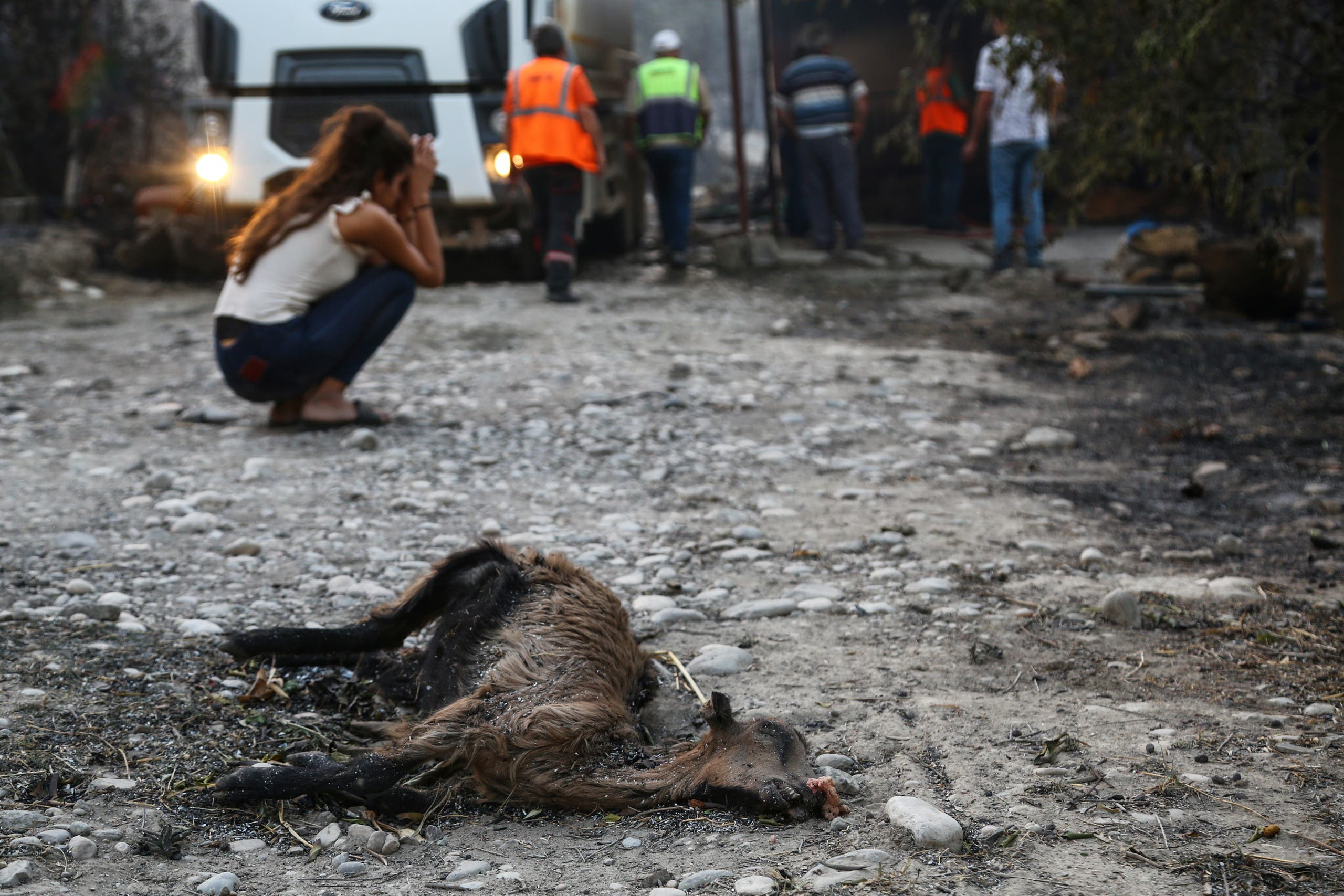 A resident reacts next to the remains of a dead animal laying in an area scorched by a forest fire that spread to the town of Manavgat, 75 km (45 miles) east of the resort city of Antalya, Turkey, July 28, 2021. (Reuters)