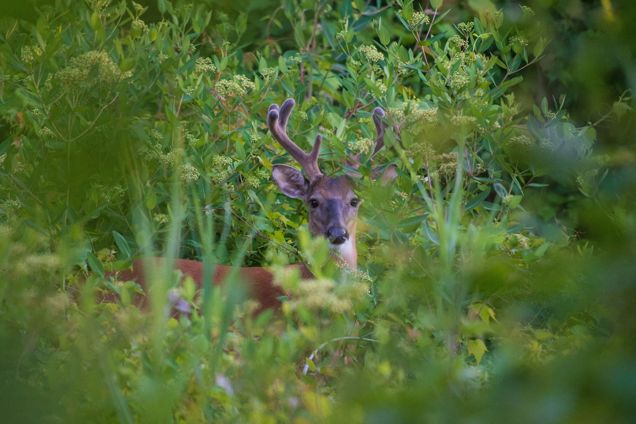 A deer is seen in Liberty State Park on June 24, 2021 in Jersey City, New Jersey. (AFP)