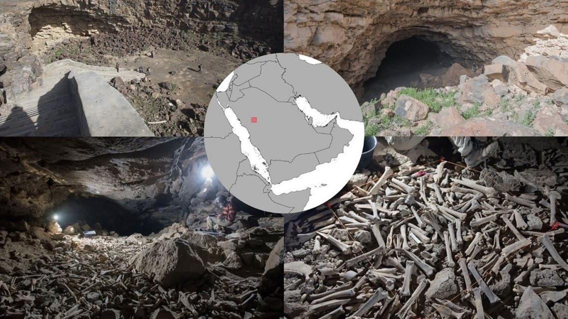 Scientists discover hundreds of thousands of animal and human remains in a cave in northwestern Saudi Arabia. (Twitter)