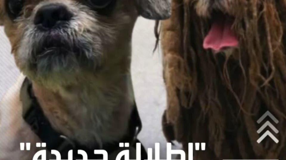 كلب ضال وزنه 10 كيلوغرامات وبعد تنظيفه أصبح 3 كيلوغرامات فقط