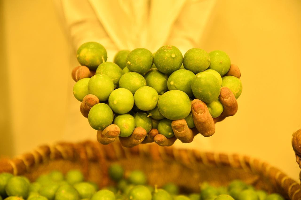 الليمون الحساوي الأخضر
