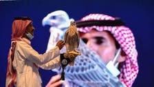 Rare falcon sold for over $71,000 during auction in Saudi Arabia's Riyadh