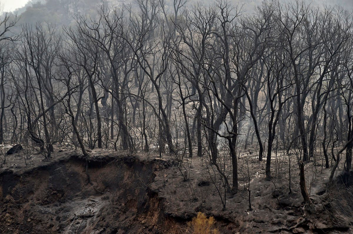 Charred trees are seen following a wildfire in the forested hills of the Kabylie region, east of the capital Algiers, on August 10, 2021. (Ryad Kramdi/AFP)