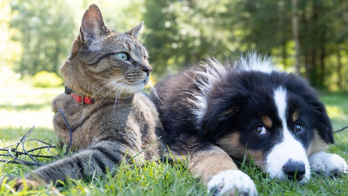 Cat and Dog sitting on grass. (Unsplash, Andrew S)