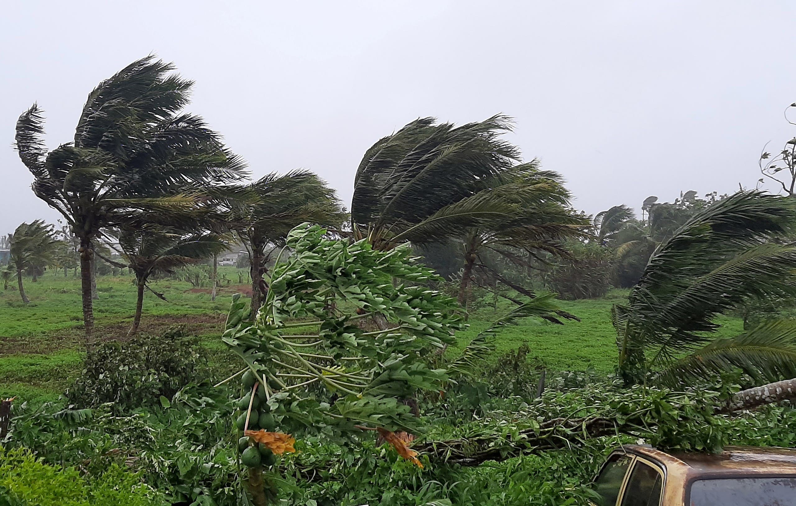 Strong winds uproot the trees from winds caused by Cyclone Ana, a category two storm, in the village of Sawani, north of Fiji's capital city of Suva, on January 31, 2021. (File photo: AFP)