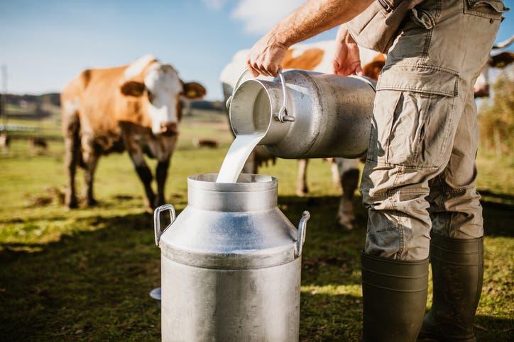 حليب البقر (آيستوك)
