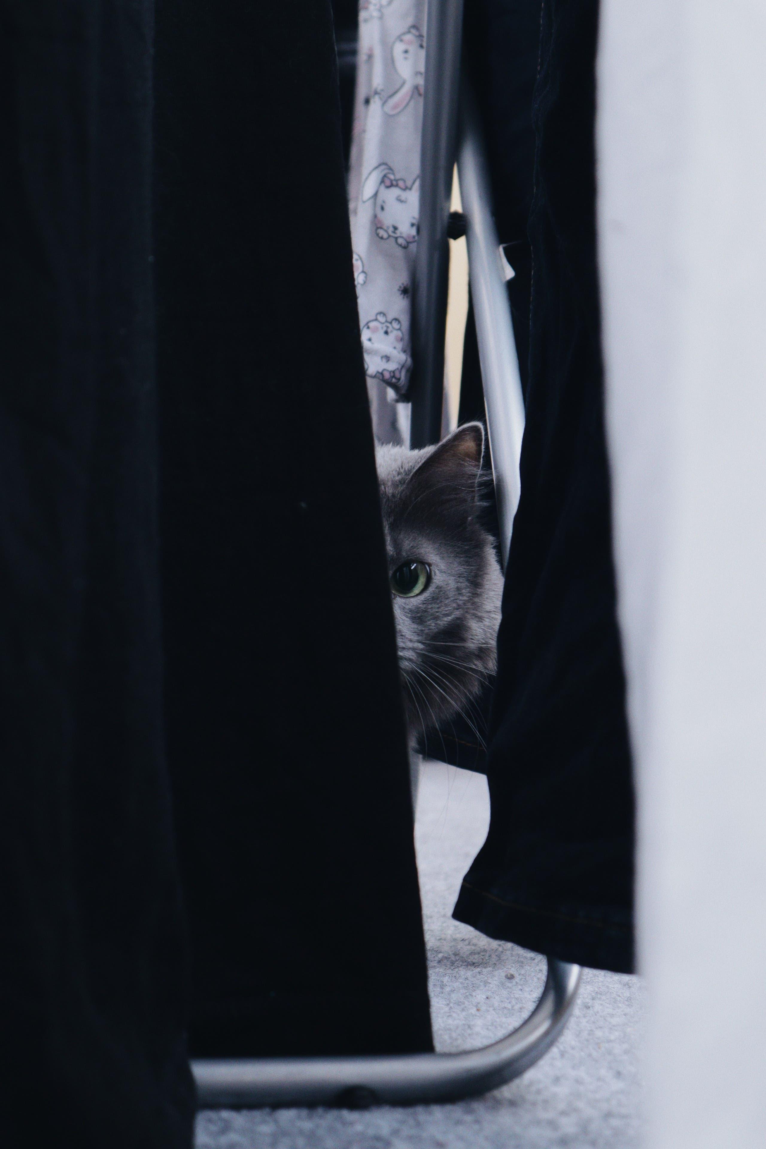 Cat hides behind a curtain. (Unsplash, Roman Skrypnyk)