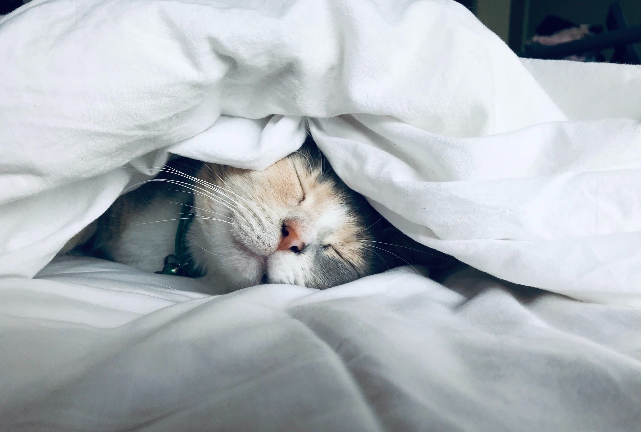 A sleeping cat is pictured. (Unsplash, Kate Stone Matheson)