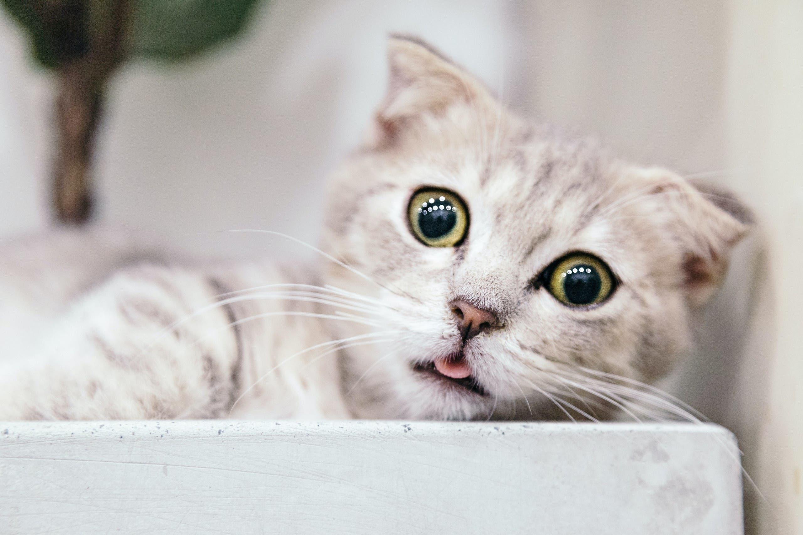 A stratled brown tabby cat. (Unsplash, Tran Mau Tri tam)