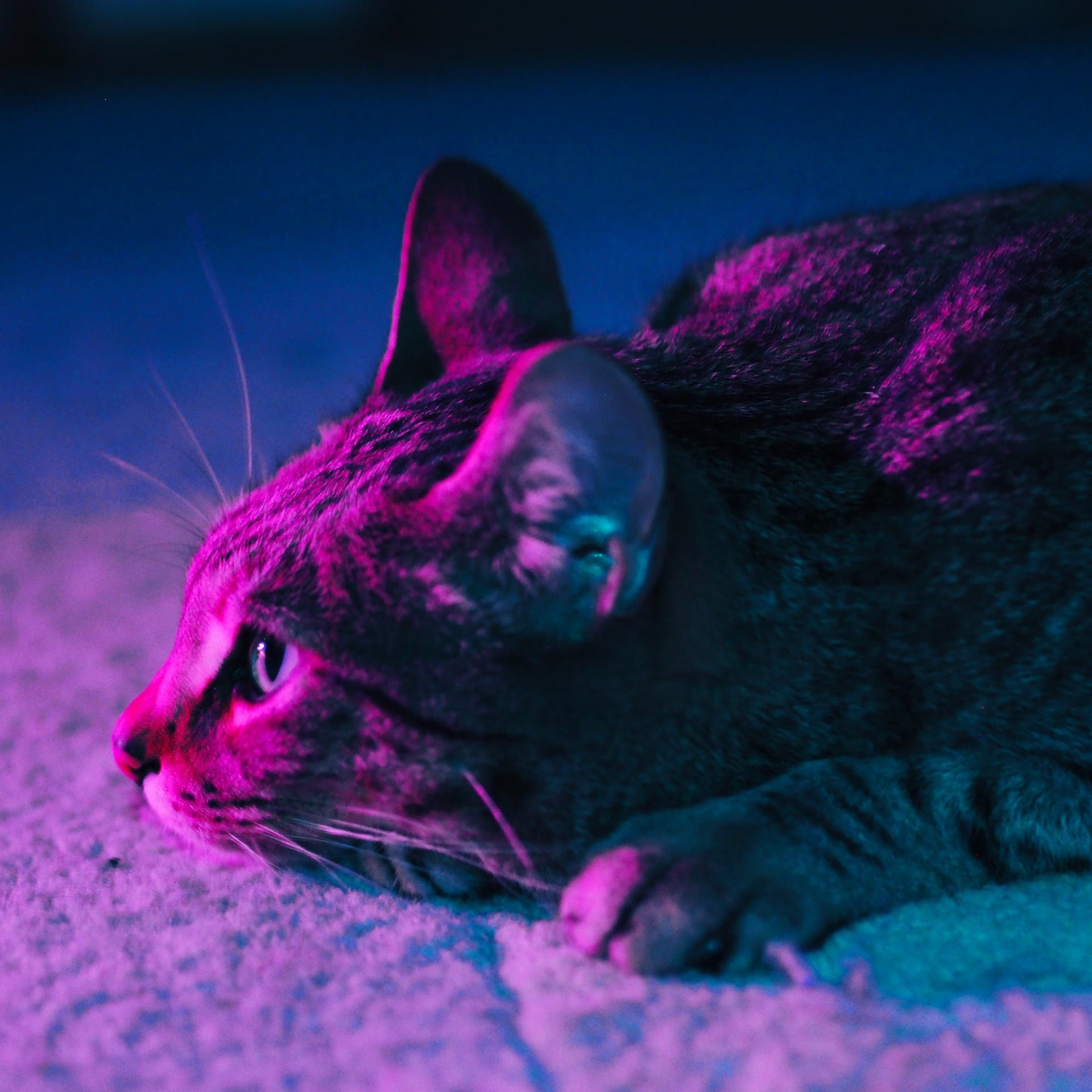 Is your cat depressed? Vet shares top 5 depression signs to look for and what to do