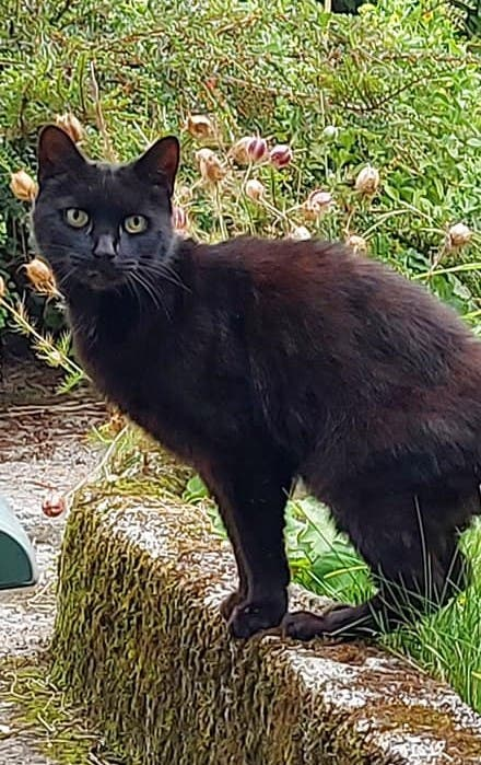 Black cat Piran, who saved the life of an elderly woman by leading rescuers to the site of the accident. (Facebook)