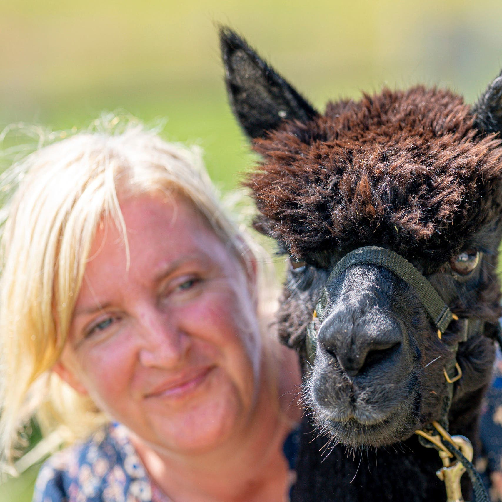 Farmer Macdonald loses appeal to save alpaca Geronimo from being killed