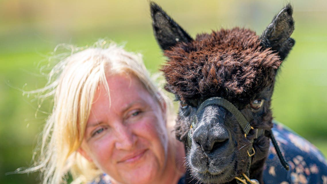 Geronimo the alpaca at Shepherds Close Farm in Wooton Under Edge, England, with owner Helen Macdonald, Monday Aug. 9, 2021. (AP)