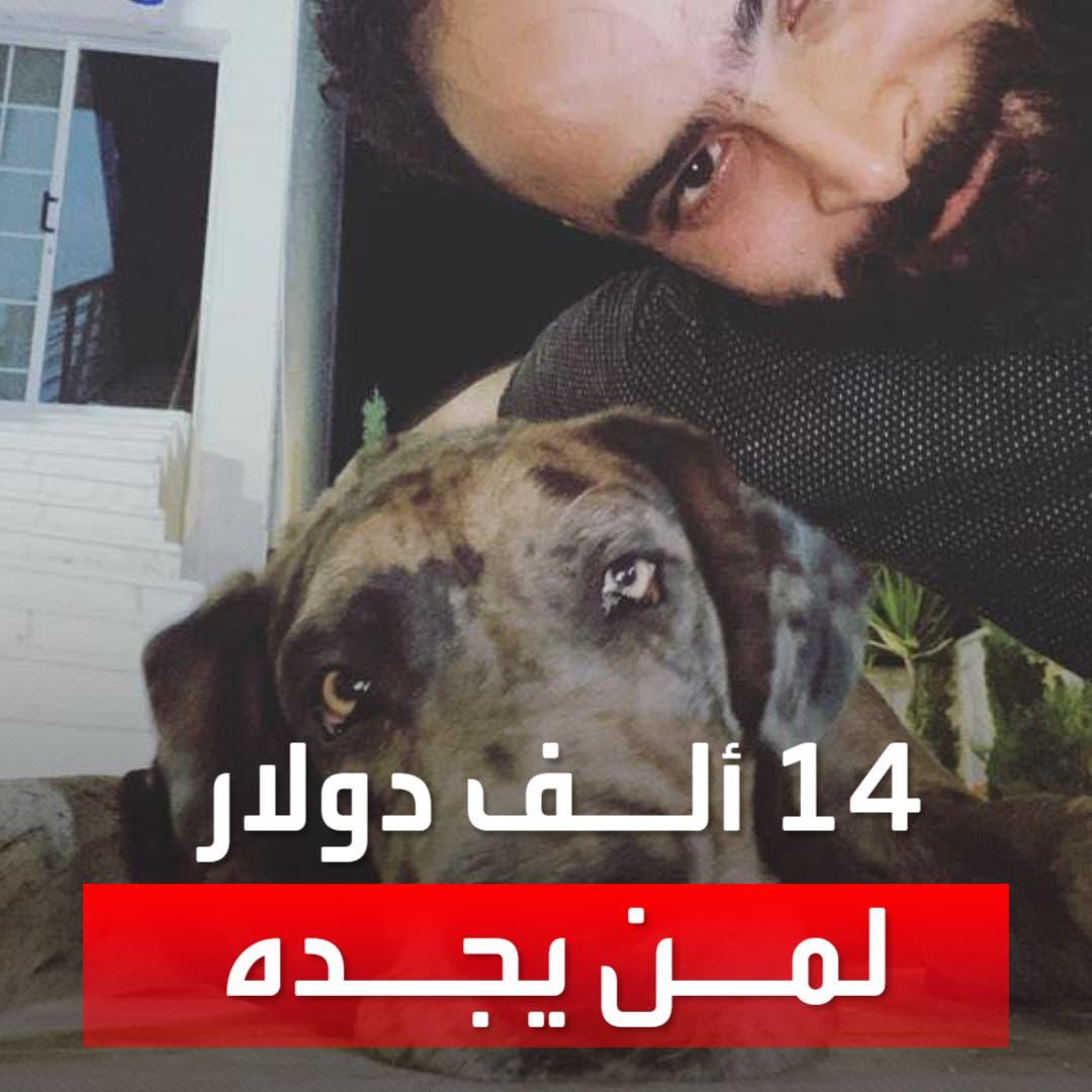 14 ألف دولار مقابل العثور على كلبه المفقود