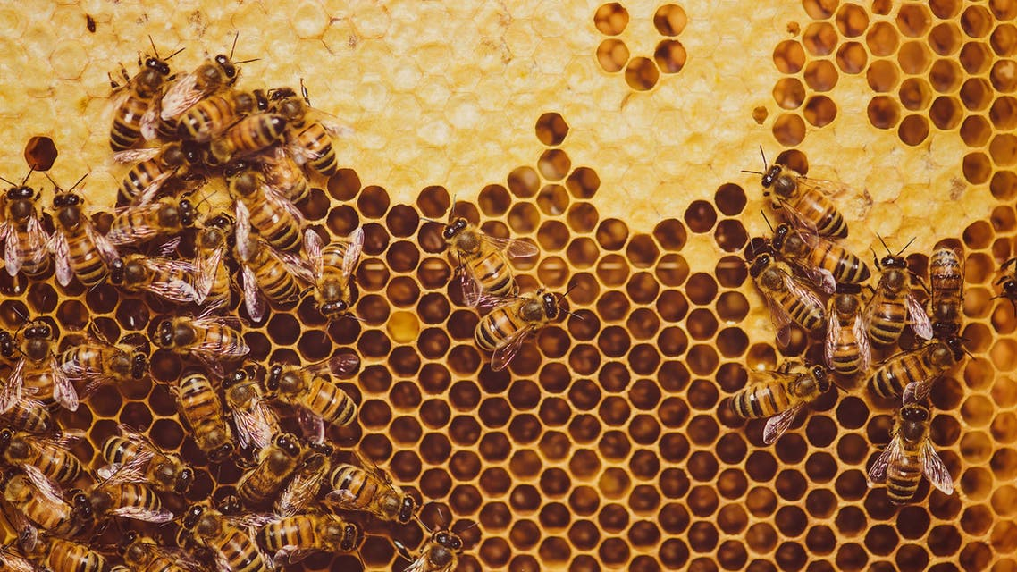 نحل النحل  آيستوك