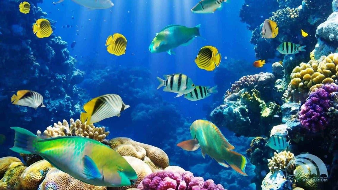 متحف الأحياء البحرية