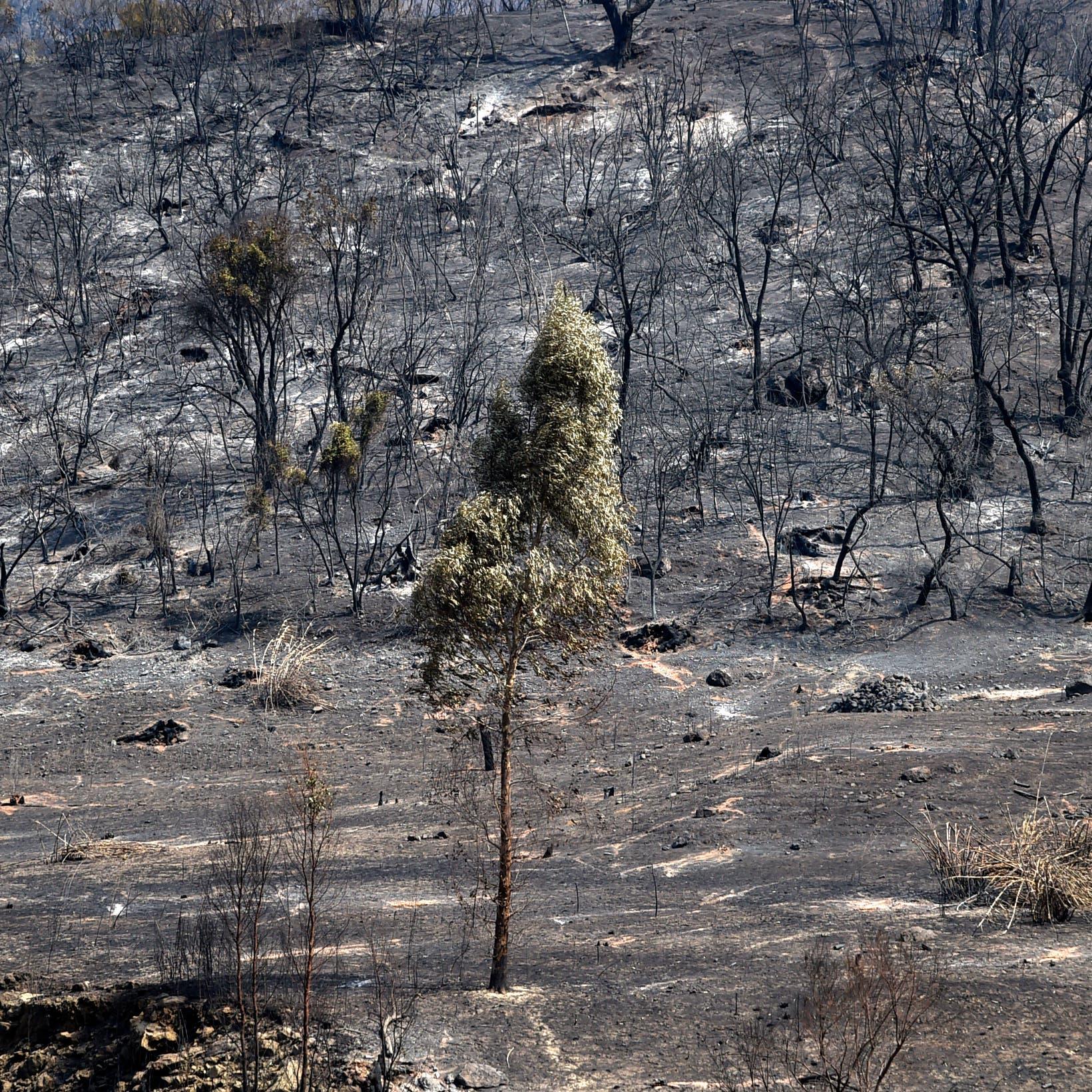 حرائق الجزائر أتت على 5000 هكتار من الأشجار المثمرة