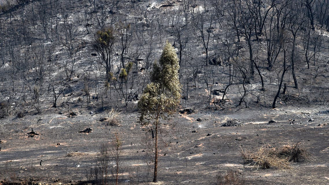 Charred trees remain after a forest fire engulfed woodland in the Ait Daoud area of northern Algeria, on August 13, 2021. Firefighters finally made headway against wildfires that have raged across northern Algeria for days but, as nationwide prayers were held for the dead, anger grew that the country was so ill-prepared.
