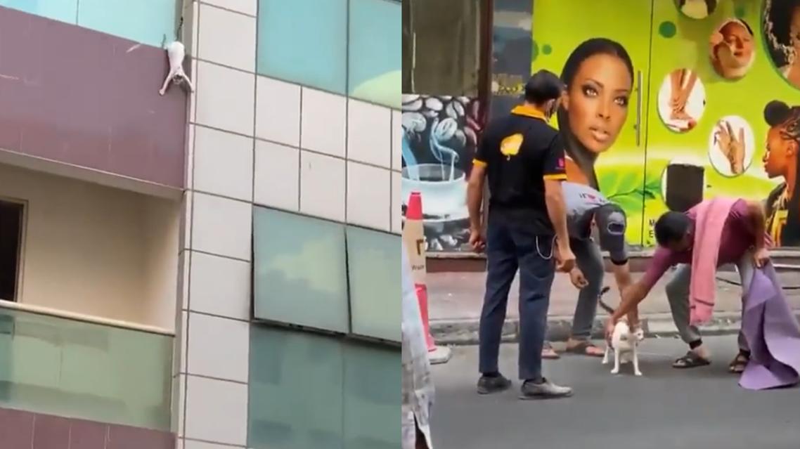 Dubai residents rescue cat. (Screengrab)