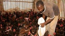 Outbreak of avian flu detected in Benin: Agriculture ministry