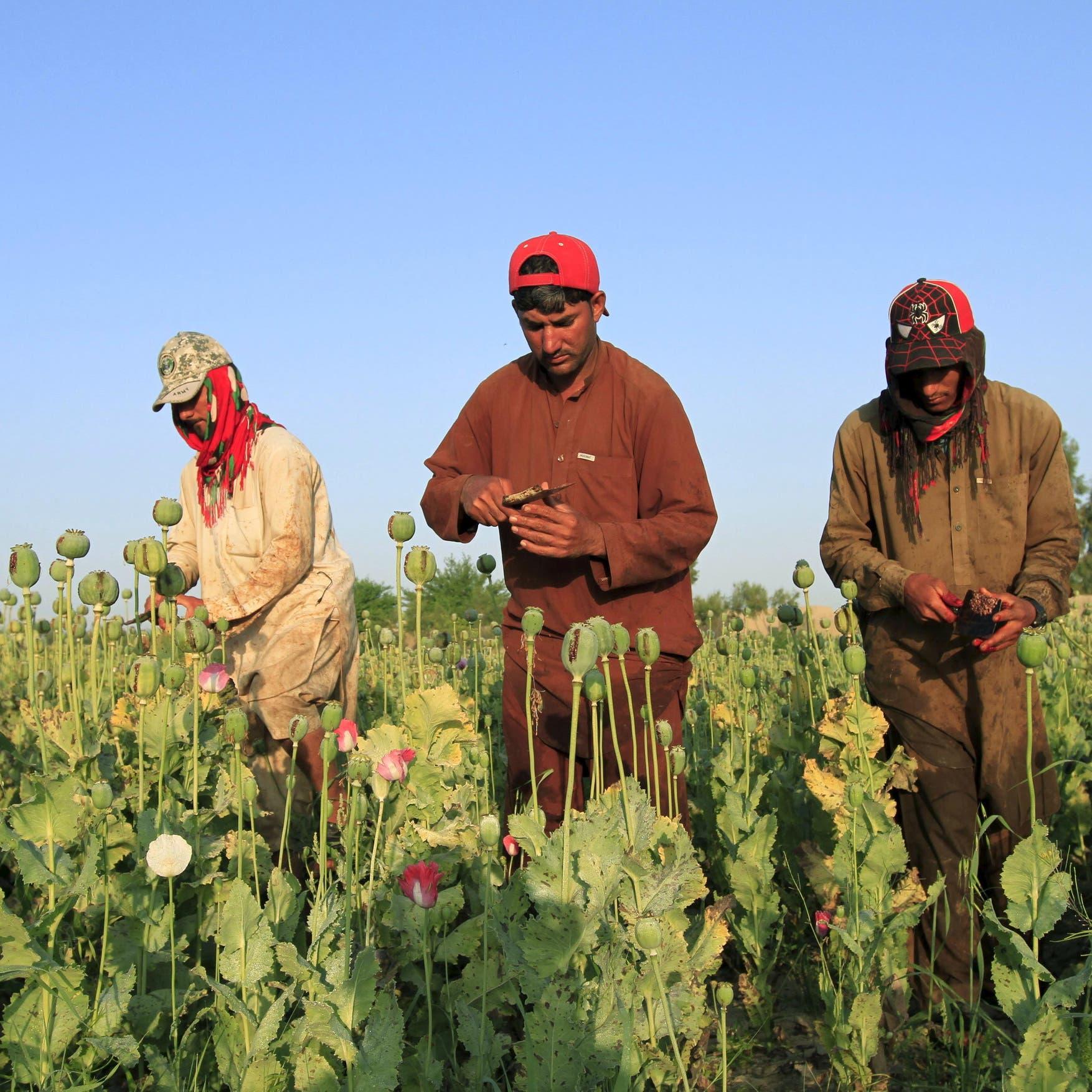 الهند وروسيا: أفغانستان قد تصبح مصنعاً ضخماً للأفيون