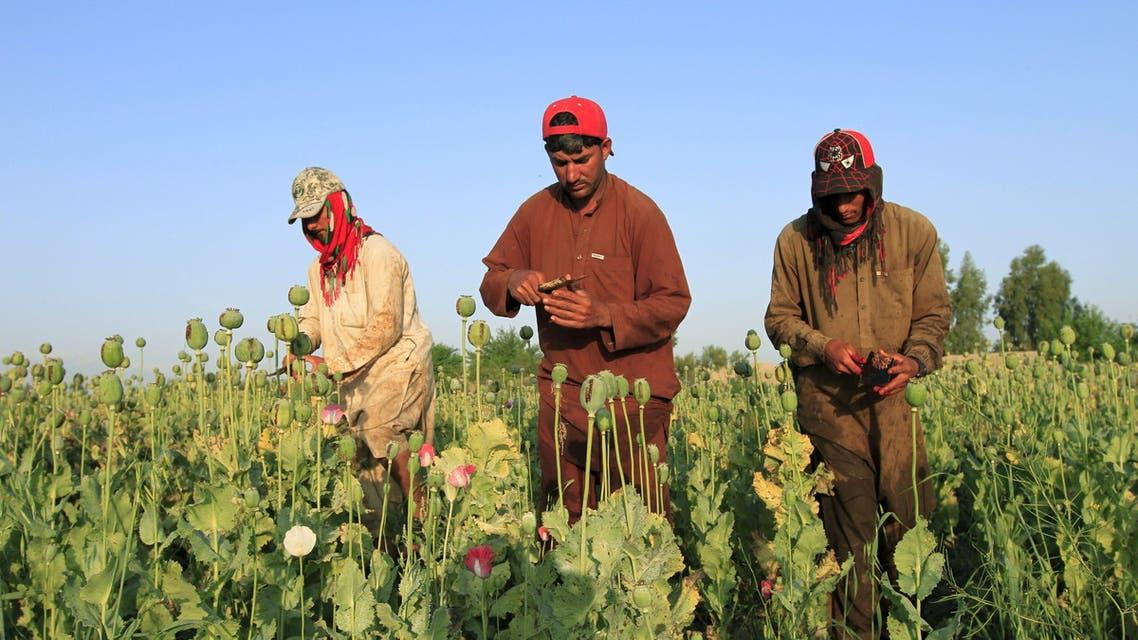 مزارعو الأفيون (رويترز)