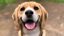 Expert shares five ways to help a dog live longer, healthier