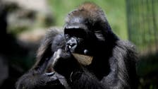 Woman having 'affair' with chimpanzee not banned, asked to 'change her behavior'