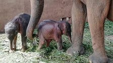 Sri Lanka reports rare birth of twin elephants