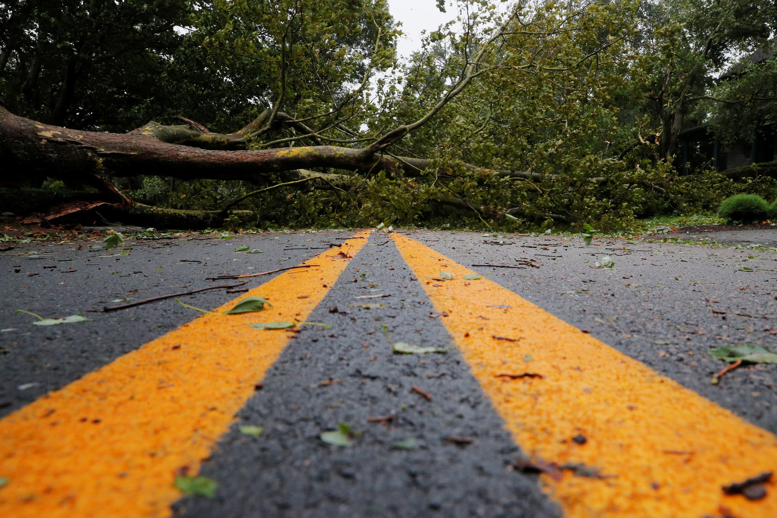 A fallen tree blocks a street as Tropical Storm Henri makes landfall in Newport, Rhode Island, US, August 22, 2021. (Reuters)