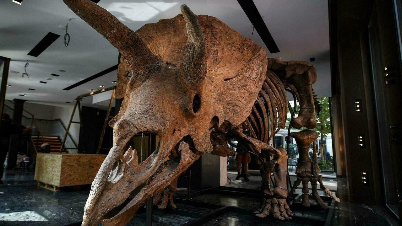 هيكل الديناصور بيغ جون