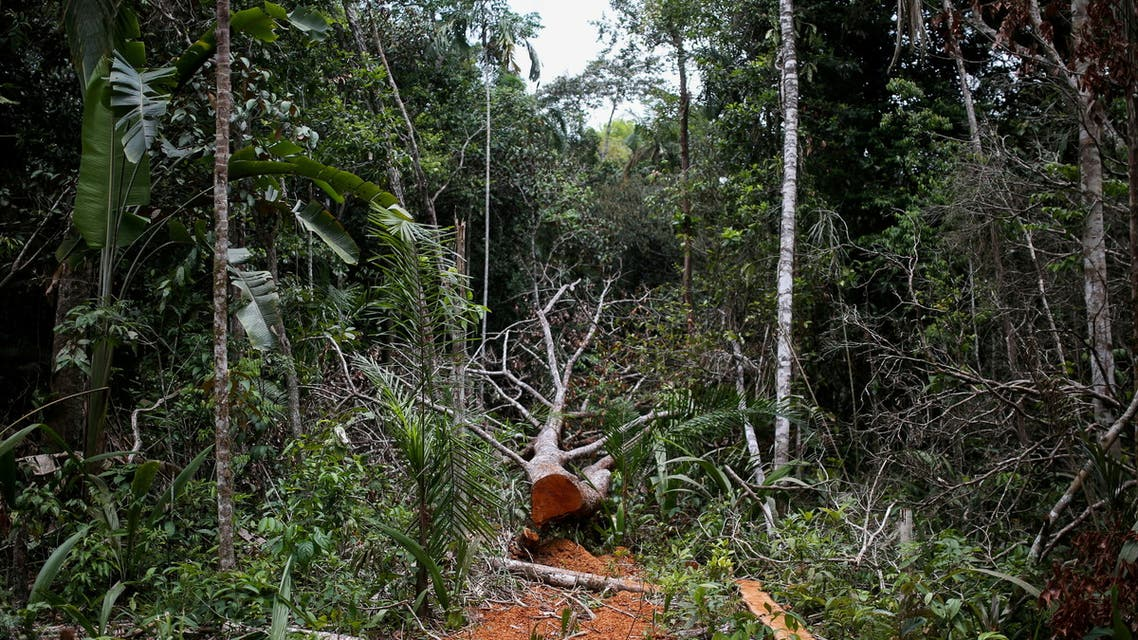 A felled tree is seen in the middle of a deforested area of the Yari plains, in Caqueta, Colombia March 3, 2021. Picture taken March 3, 2021. (File photo: Reuters)