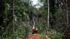 About 30 pct of world's tree species at risk of extinction: Report