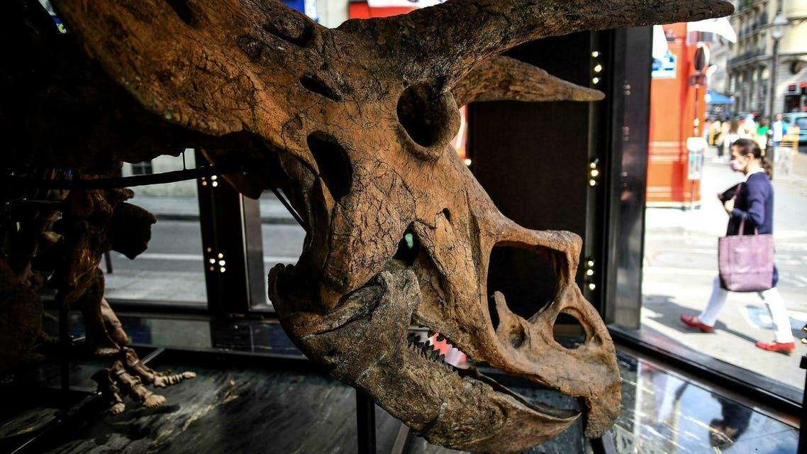 Big John Triceratop