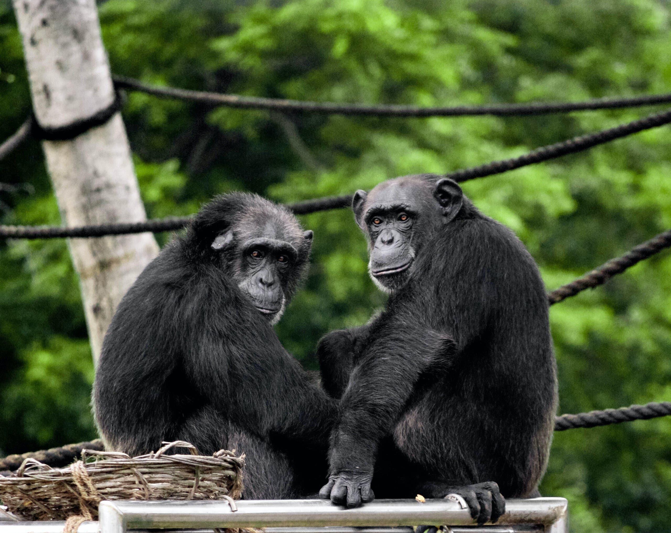 Two monkeys. (Unsplash, Satya Deep)