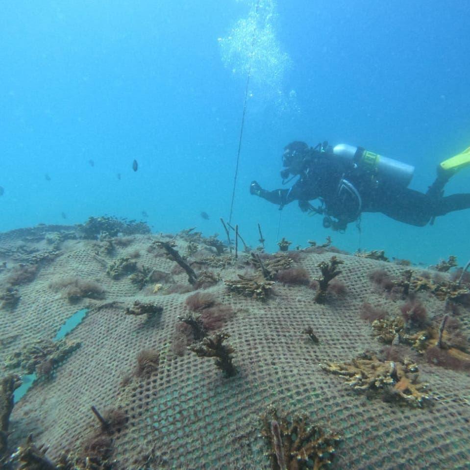 مغامرة غوص داخل متحف بيئي عائم تحت الماء