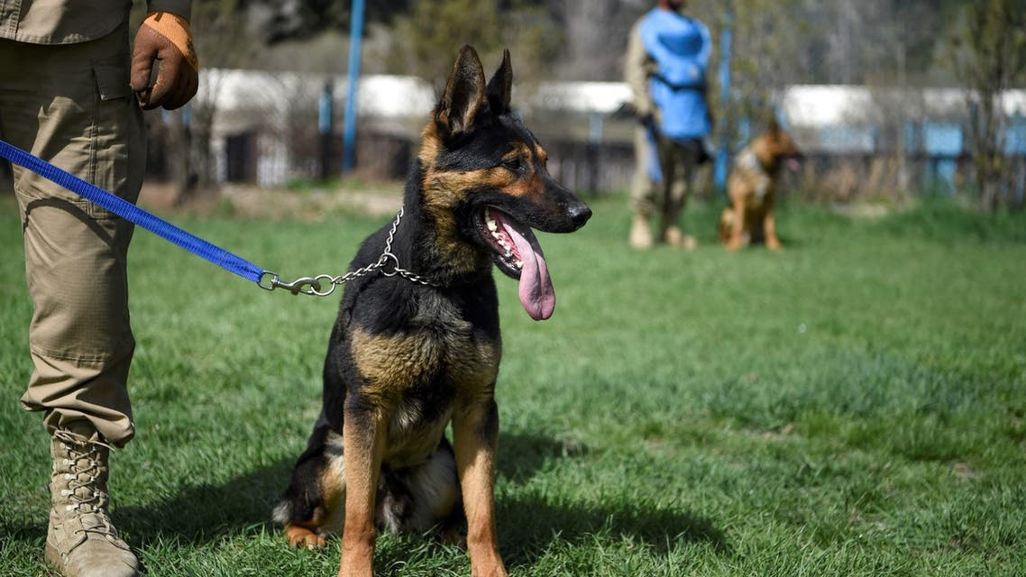 In this photo taken on April 7, 2019, an explosive detection dog is kept on leash during a practice session at the Mine Detection Centre (MDC) in Kabul. (AFP)