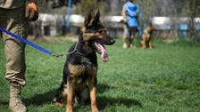 US troops left dogs behind in Afghanistan to be 'tortured,' 'killed': NGO