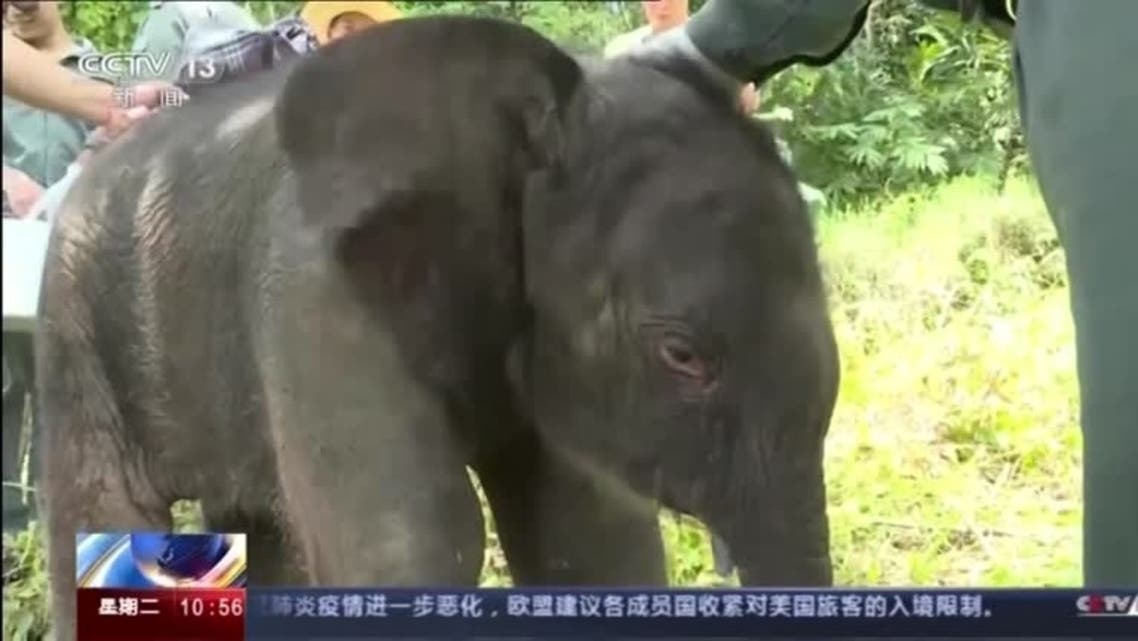 The abandoned baby elephant rescued in southwest China. (CCTV via Reuters)