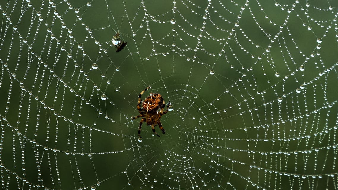 A picture taken on August 22, 2019 shows a fly and a spider at Tancarville, northwestern France. (AFP)