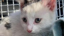Kitten survives 230-mile journey across UK in car engine compartment