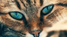 Top 10 rarest cats in the world