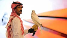 World's most expensive falcon sold in Saudi auction for over $465,000
