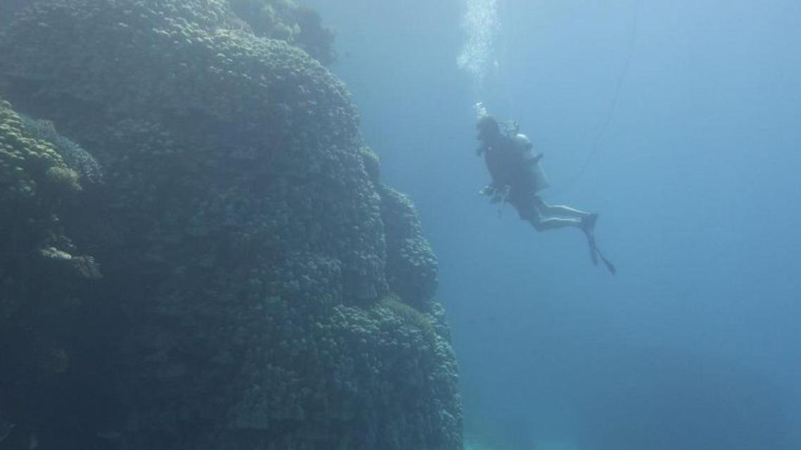 الجزير المرجانية المكتشفة (واس)