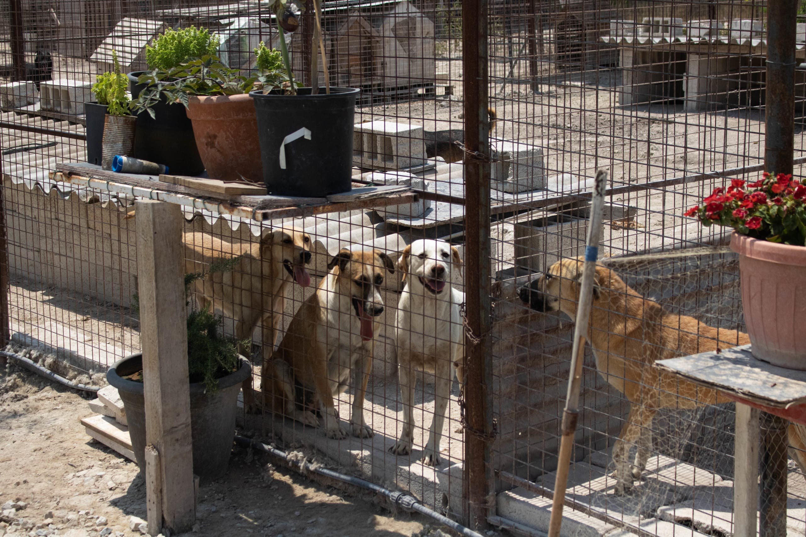 Should things continue to get worse, pet shelters already running at capacity will need to start turning away animals. (Image: Nicholas Frakes)