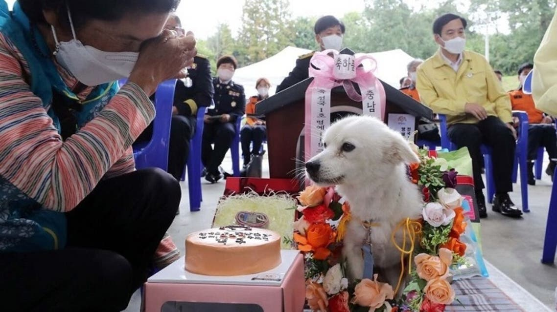 A dog that saved a 90-year-old woman's life after she fainted in a rice field has been named South Korea's first honorary rescue dog. (Twitter)