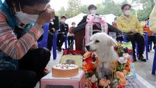 Dog saves 90-year-old woman's life, appointed S. Korea's first honorary rescue pup